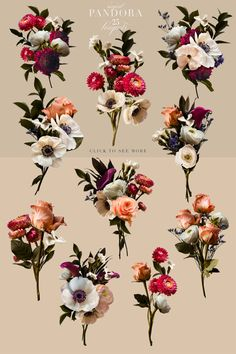 Lovely roses, anemones, strawflowers, ranunculus, and others were photographed to create this beautiful clip art set that really is magical. Rose Design, Dark Backgrounds, Paper Background, Overlays, Anemones, Ranunculus, Pandora, Clip Art, Graphic Design