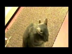 Funny cat saying *hey*