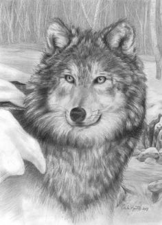 drawing of wolf with blue eyes and birches | Playful Eyes Drawing at ArtistRising.com