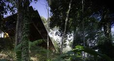 marra + yeh architects: shelter @ rainforest