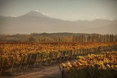 #OTOÑO #MENDOZA #VIÑEDO #VINO Mendoza, Vineyard, Tours, Mountains, Nature, Travel, Outdoor, Scenery, Fall Landscape