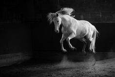 11 Photos That Will Redefine the Way You Look at Horse Photography - Horse Collaborative