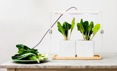 Design-Centric Indoor Plant Lights For Urban Living
