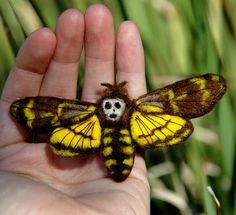Silence of the Lambs - really, this creature does exist + makes for a great movie poster design  Death's Head Hawk Moth pin by Pammy Dawn