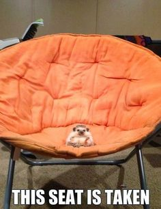 Funny pictures of the day (80 pics) - This Seat Is Taken
