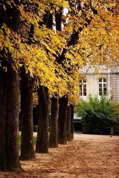 Jardin du Luxembourg in Paris Palais Du Luxembourg, October Country, Autumn Scenery, Le Palais, Parcs, Autumn Home, Autumn Inspiration, City Lights, Paris France