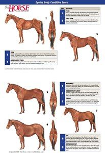 The Horse   Equine Body Condition Score Poster   TheHorse.com