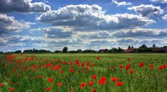 Field Of Poppies, Brandenburg, Nature Champs, Poppy Images, Field Marketing, Buddhist Philosophy, What Goes On, Free Images, Poppies, Flora, Nature