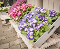 Succulents, Pastel, Vegetables, Spring, Plants, Cake, Succulent Plants, Vegetable Recipes, Plant