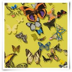 Christian Lacroix Carnets Andalous Butterfly Parade Wallpaper