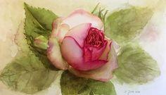 Eden Rose II - Pierre de Ronsard Rose  Original Watercolor Painting  Size: 11 x 18,8 inch (28 cm x 48 cm)