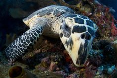 Onderwaterfotografie - een bijzondere dimensie in fotografie