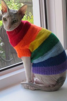 Kitten Costumes, Pet Costumes, Sphynx Cat Clothes, Cats In Clothes, Cat Clothing, Cute Funny Animals, Cute Cats, Cute Hairless Cat, Sphinx Cat