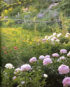 Flowers in Profusion - Tasha Tudor's Garden in June (linen & lavender)