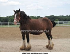 Draft horse Stock Photos and Images. 259 draft horse pictures and royalty free photography available to search from over 100 stock photo brands. (Page 5)