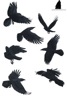 little raven tattoos -