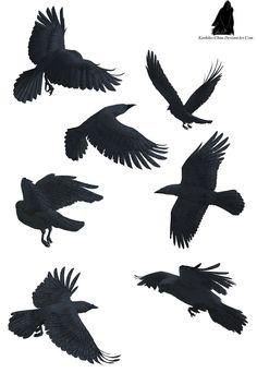 Google Image Result for http://fc01.deviantart.net/fs70/i/2011/193/b/e/crow_tattoo_by_kashiko_chan-d3nmm6l.jpg