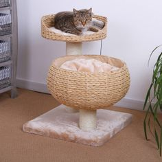 I like this because it'll look coordinated with my wicker furniture. Pet Pals Eco Friendly Doubble Nesting Cat Condo - PetSmart