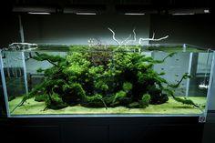 Awesome ADA Nature Aquarium #aquascape