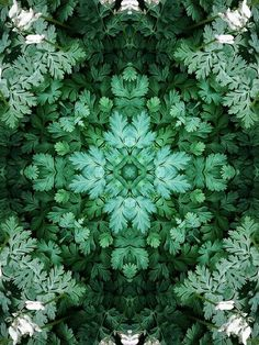 green .. X ღɱɧღ. || the poetry of material things