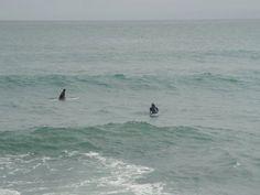 Surfing, Punakaiki, West Coast.