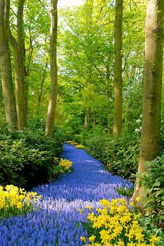 A path of bluebells!  I love this photo!  The colors are so vibrant!