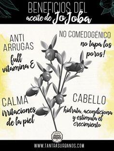 Beneficios del aceite de jojoba - Tantras