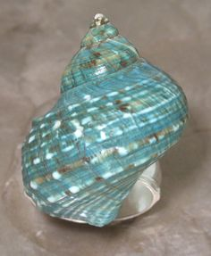 Turquoise Shell Napkin Ring by Turnwald