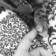 Holding hands is always nice...even when one hand is a paw! #bestfriends  #holdinghands #paw #blackandwhite #blacknwhite_perfection #wednesday #thelittlethings #blessed #ladybrennaoffairfax #cat #cats #catsofinstagram #catsagram #catsofworld #kitty #katzenworldblog #cats_of_instagram #catlover #bengal #bengalcat #bengalsofinstagram #bengal_cats #faithhopeloveandlucksurvivedespiteawhiskeredaccomplice #vais4bloggers #vafoodie #foodblog #foodblogger #virginia
