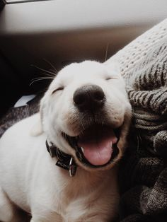 That smile though! :) http://pinterest.com/jaykaslo/must-love-dogs