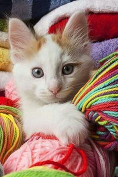 cat and multicolor wool