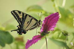 The Butterfly Affair Blog