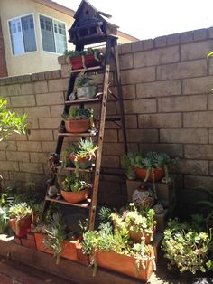 Recycled old ladder into vertical succulent garden