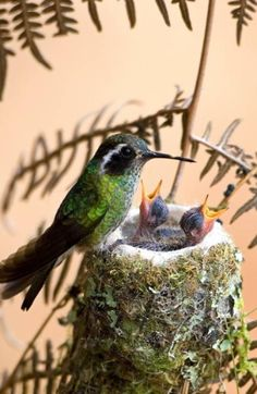 A Mama Hummingbird and her Babies by V.Marie