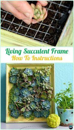 DIY Living Succulent Picture Frame Garden Instruction- DIY Indoor Succulent Garden Ideas Projects