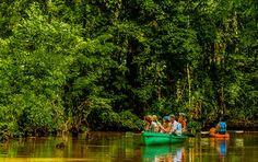 Erkundung des Nationalparks Tortuguero per Boot
