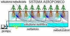Aeroponica