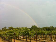 Wales Manor Winery & Vineyard | Vineyard Tours & Wine Tastings | McKinney, Texas