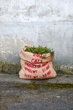 Zuhause gesucht für alte Jutesäcke Jute, Helpful Hints, Planter Pots, Blog, Christmas Ornaments, Inspiration, Holiday Decor, Creative, Flowers