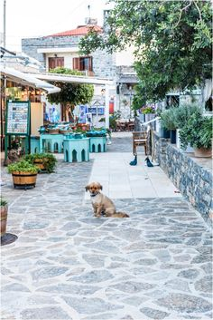 One Day Trip Travel Guide in Northeast Crete : Agios Nikolaos, Elounda, Plaka & Spinalonga Island. Click through to read everything you need to know before traveling into this part of the Greek island