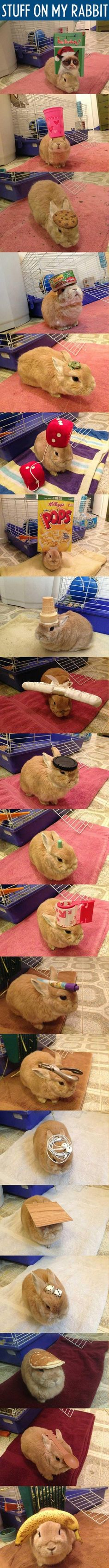 Bahah I want a bunny to put stuff on! XD