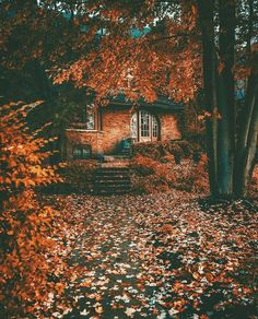 Pretty leaves The post Pretty leaves autumn scenery appeared first on Trendy. Autumn Scenery, Autumn Cozy, Autumn Feeling, Seasons Of The Year, All Nature, Autumn Nature, Autumn Photography, Autumn Aesthetic Photography, Autumn Aesthetic Tumblr