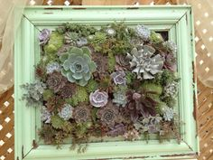 Shabby chic succulents frame