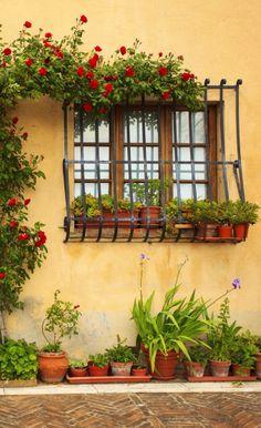 Montepulciano, Siena, Italy