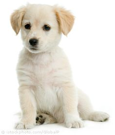 dogs and puppies - Google Search