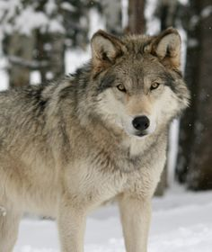 Colorado Wolf and Wildlife Center- $15-$25 for adults. looks scary...