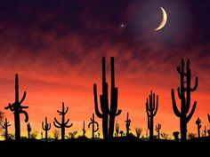 Saguaro National Park Arizona.