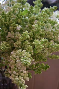 """I grew up having """"azucenas"""" around.  They have such a wonderful scent!"""
