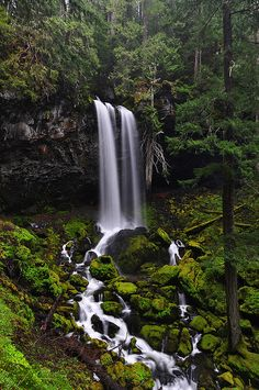 Grotto Falls, east of Roseburg, OR by LiefPhotos, via Flickr  (Find directions to this waterfall here:   http://www.blm.gov/or/districts/roseburg/recreation/Thundering_Waters/grotto_falls.html