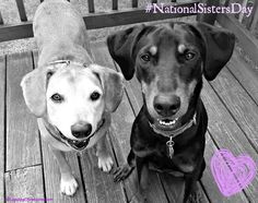 Sophie and Penny wish everyone a Happy #NationalSistersDay Sisters By Heart #rescuedog #Sisters ©LapdogCreations Dog Mom | Rescue Dog | Life With Dogs | National Sisters Day